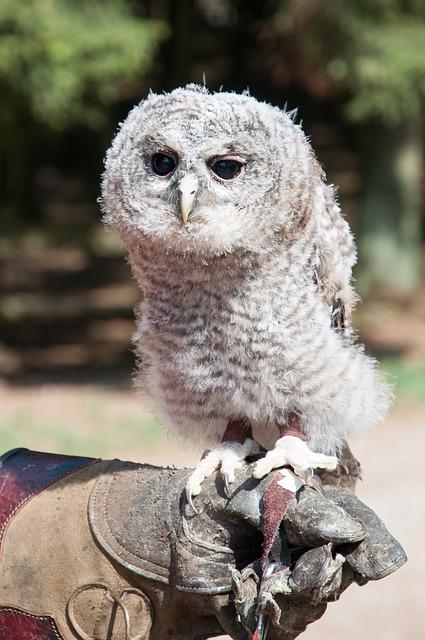 Free tawny owl breeding free deer hellenthal baby