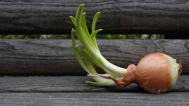 Free onion yellow bench bloom wood green