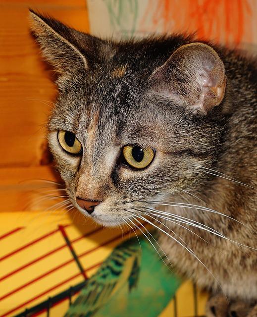 Free domestic cat cat face cat head adidas curious