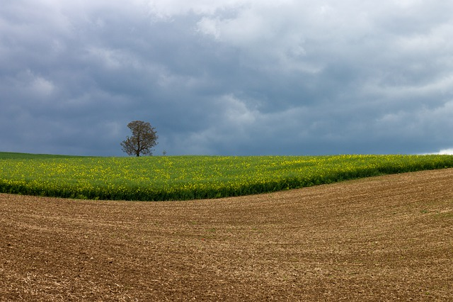 Free oilseed rape field tree clouds landscape arable