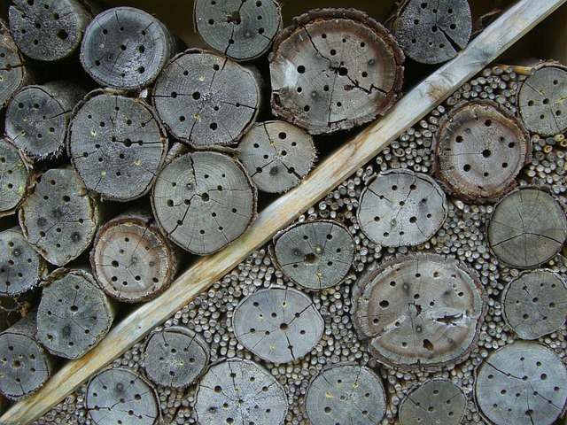 Free insect hotel nesting help drill holes entry openings