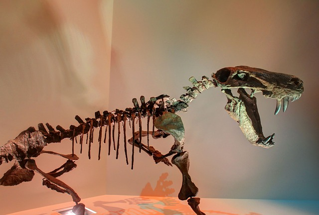 Free gorgon dinosaur skeleton bones fossils prehistoric