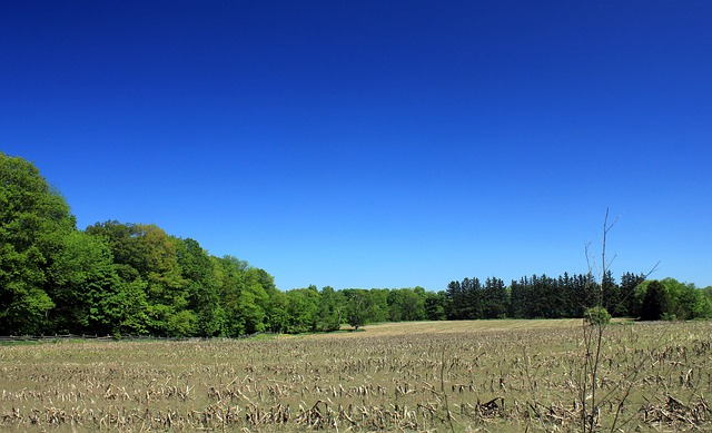 Free corn fields bronte creek state park canada ontario