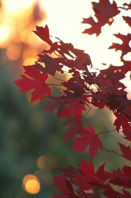 Free fall autumn leaf tree fall colors fall leaf