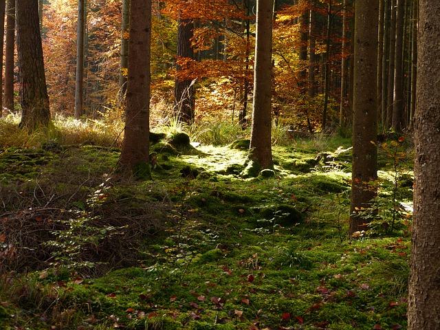 Free forest autumn golden autumn fall foliage