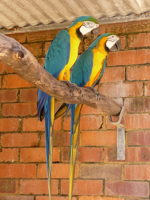 Free parrots tropical birds couple wildlife wings
