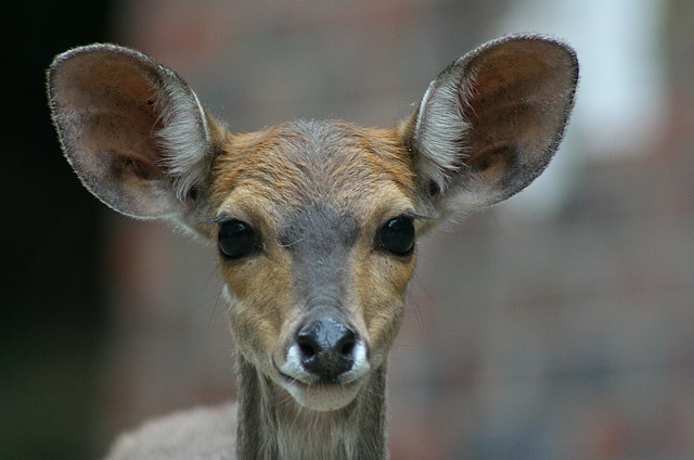 Free wildlife buck juvenile close-up