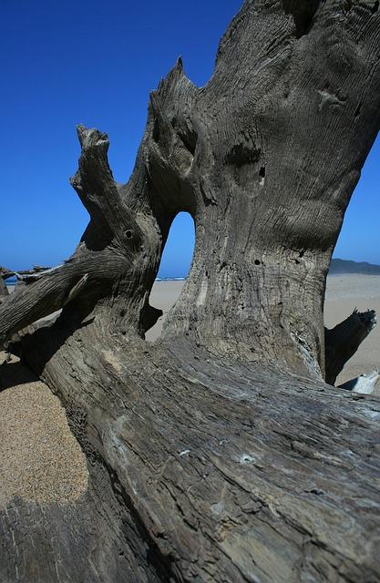Free wood sand beach blue-sky