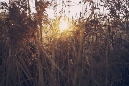 Free Sunlight through grass thicket