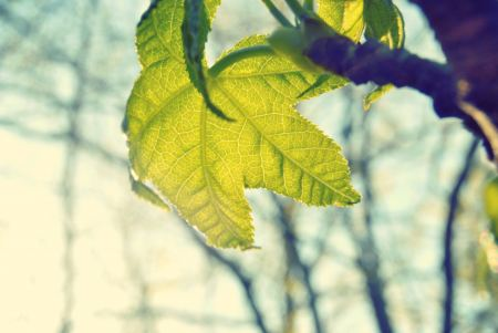 Free Green leaf in sunlight