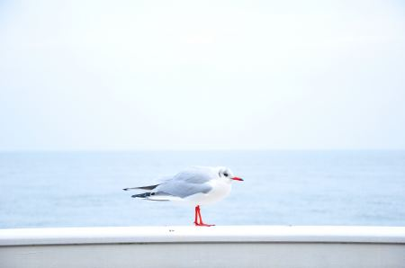 Free Seagull sitting on wall near the sea