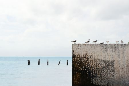 Free Seagulls on a wall near the sea