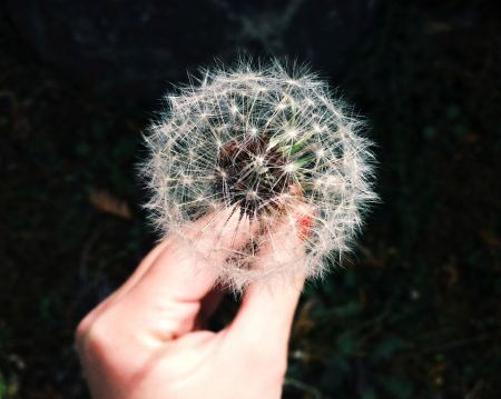Free Woman hand holding a dandelion