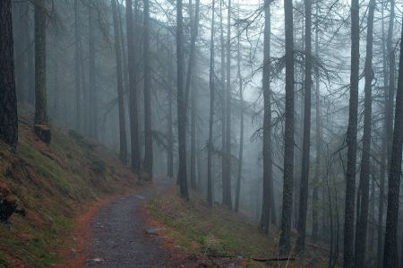 Free Narrow path through the foggy forest
