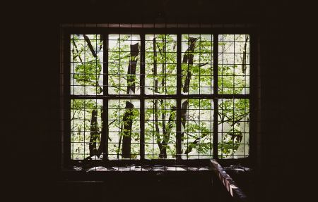 Free Trees seen through a window with bars