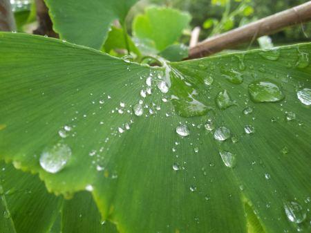Free Raindrops on a leaf