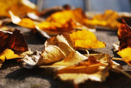 Free Fallen leaves
