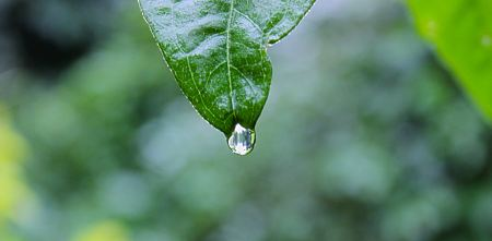 Free Drop of dew on a leaf