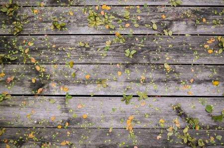 Free Green and yellow leaves on wood