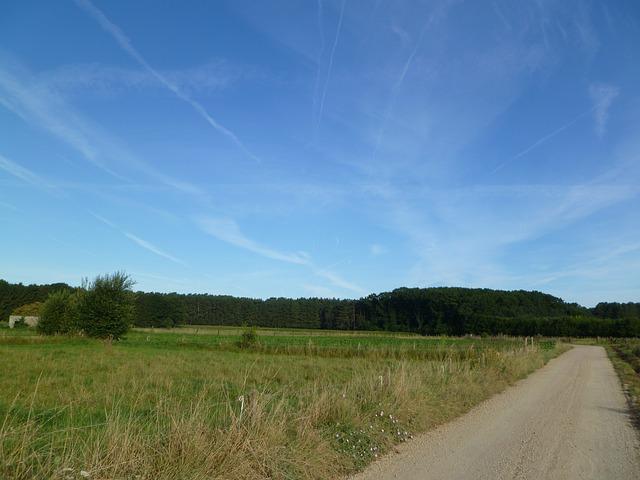 Free path road rose alley green blue field meadow