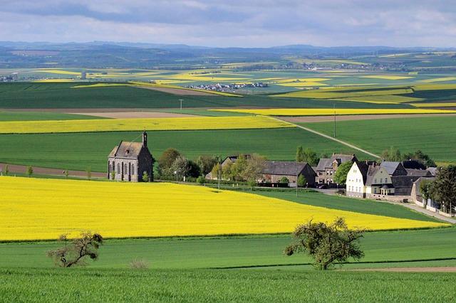 Free oilseed rape landscape eifel minkel field