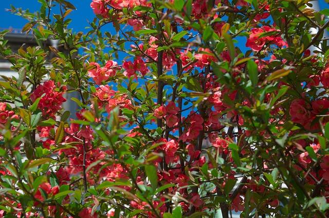 Free garden sky flowers tree blue red