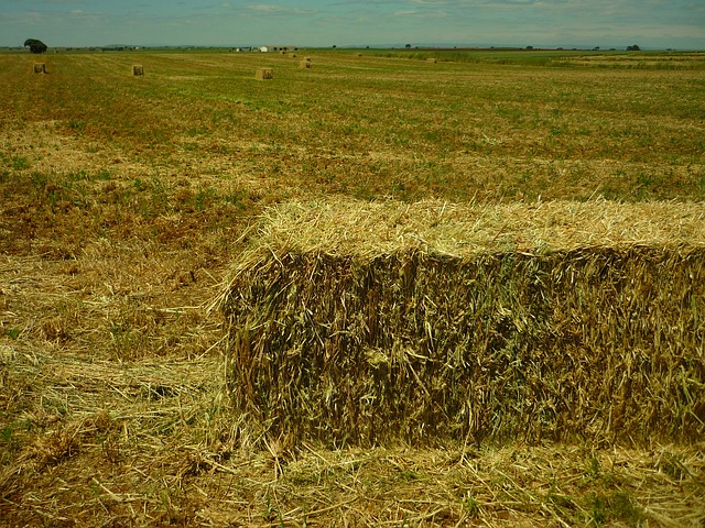 Free field agriculture cereal bales may work plot