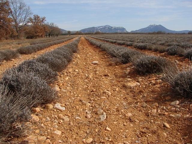 Free provence france lavender winter mediterranean