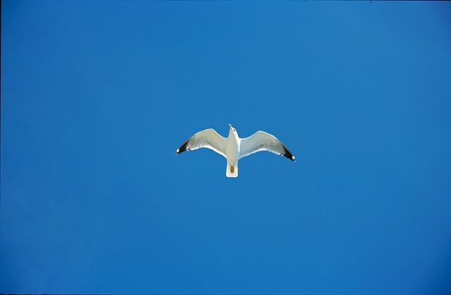 Free sky seagull blue birds croatia