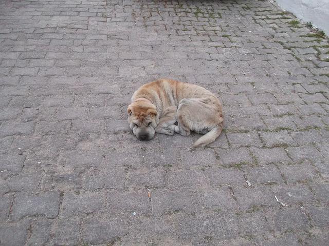 Free dog street sleepyhead scott