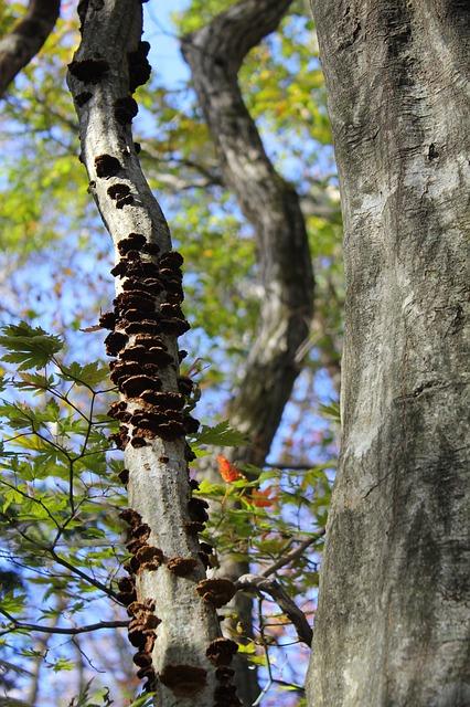 Free wood forest vine mushroom