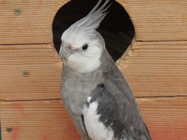 Free parrot cockatiel bird cage gray white
