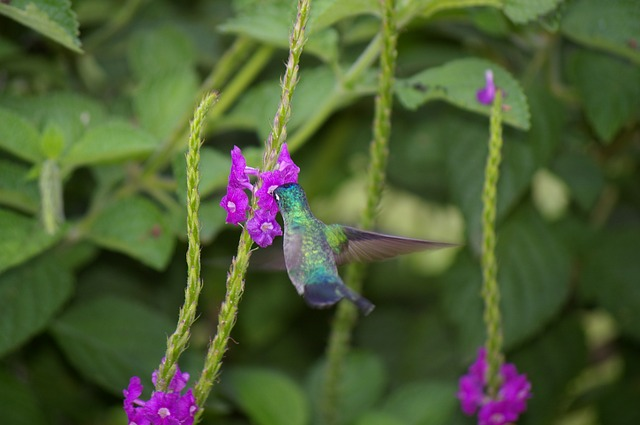 Free hummingbird bird flower flight