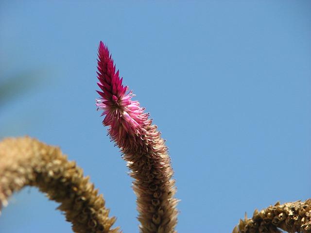 Free flower flora flowers