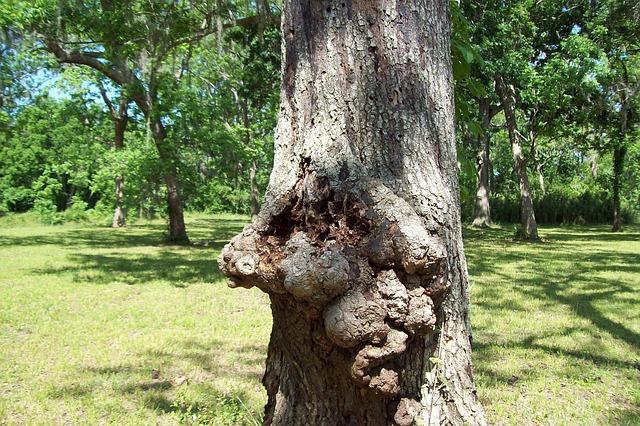 Free face facs trees greenery green park