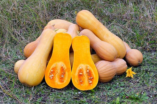 Free butternut squash produce gourd vegetable food