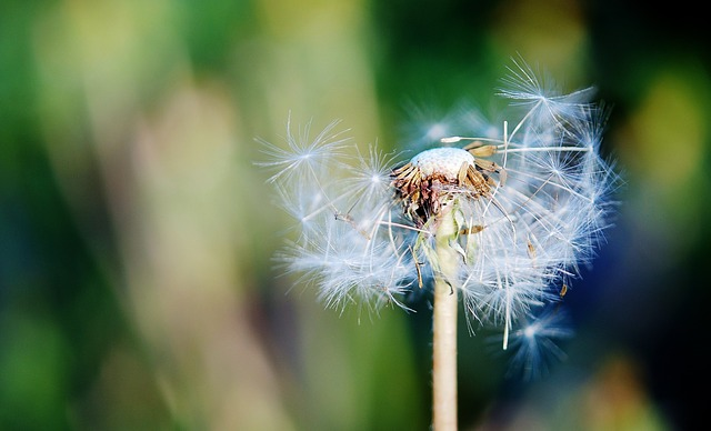 Free sow thistle grass summer background beautiful