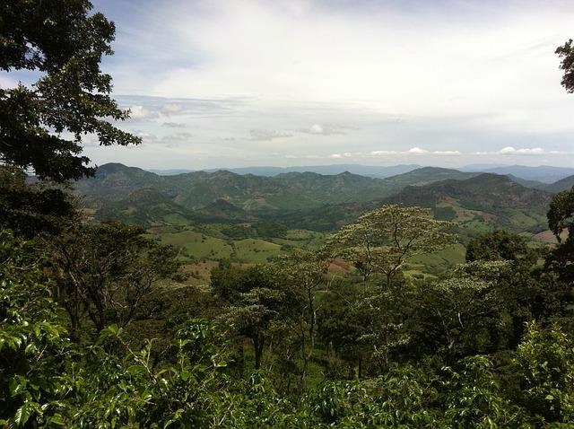 Free plantation coffee nicaragua landscape jungle
