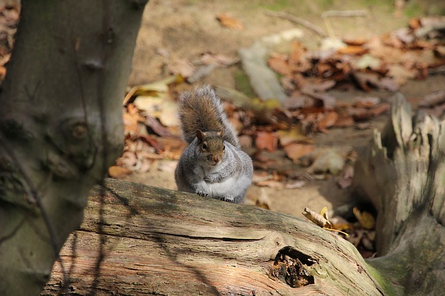 Free squirrel wildlife nature outdoors