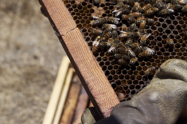 Free honey honeybee honey jar bee insects bees insect