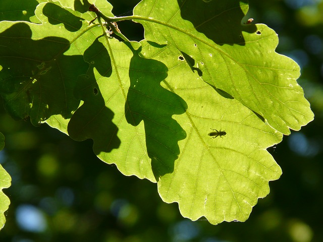 Free leaves green shadow play