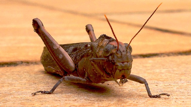 Free front cricket insects antennas