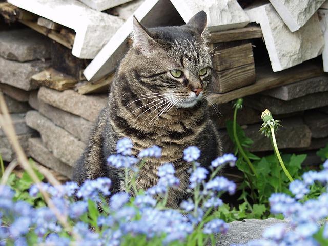 Free hangover profile head sit pet tomcat in free