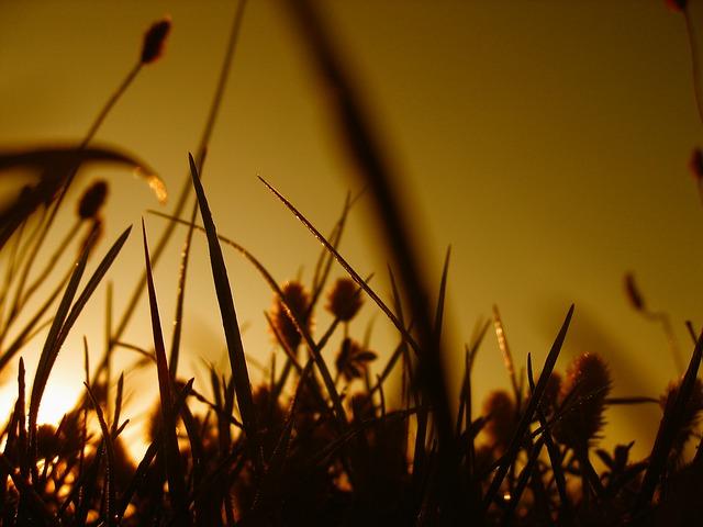 Free halme grass sward line blade of grass meadow