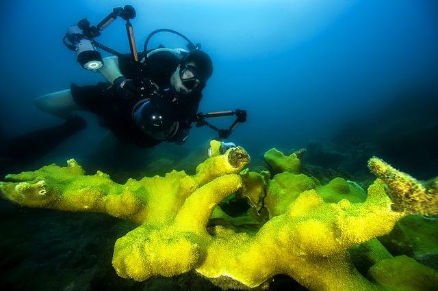 Free diver sea ocean water underwater coral camera