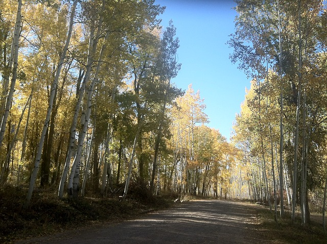 Free Photos: Country road rural country life trees blue sky | webmen