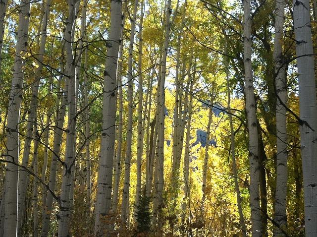 Free sun trees sunshine morning tree