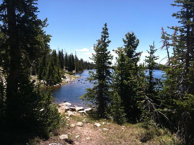 Free trees lake mountains