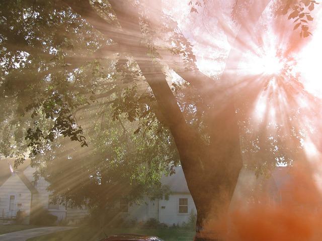 Free sunlight rays light smoke orange