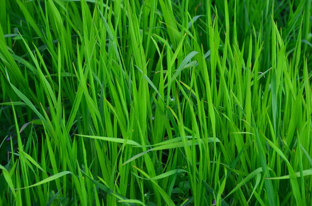 Free grass meadow green spring summer hay